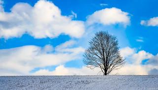 3.11.17  Landscape Tree 1