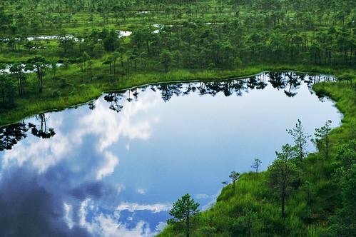the bog | by redmetalzero