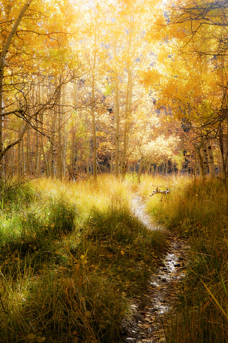 A Walk into the Light   by Steve Corey