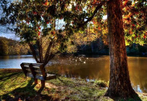 autumn trees sun lake fall water bench shade hdr