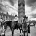 Westminster Police Horses by MKHardyPhotography
