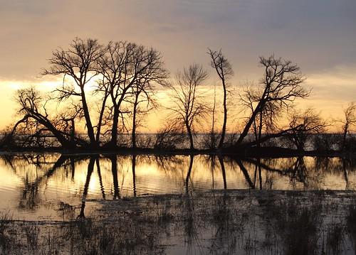 scenery sunrise tree marsh whitby ontario canada