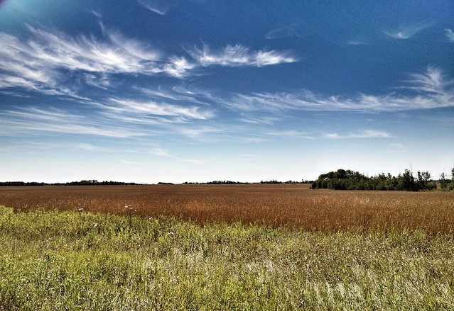 Toasted grain; green grass; blue sky.