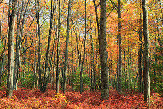 Kunes Camp Trail (18)   by Nicholas_T
