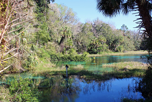 landscape scenery springs river water trees palmtrees aquaticvegetation park statepark dunnellon florida