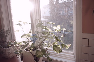 wintering geranium | by mazaletel