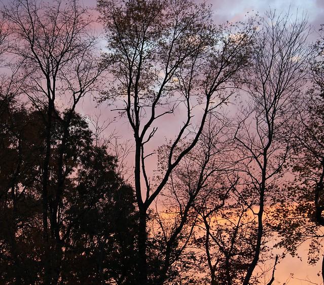 Silhouette Sunset #2