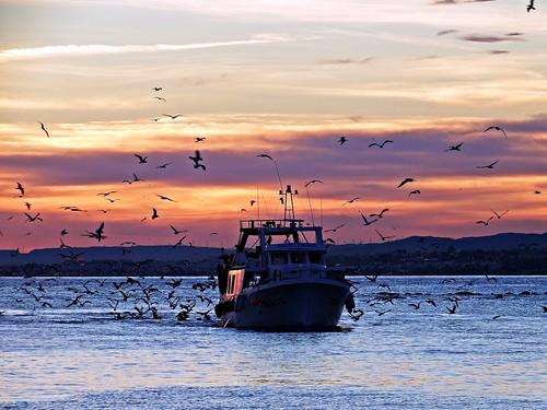 andalucia atardecer marbella málaga mar mediterráneo costadelsol españa spain sunset