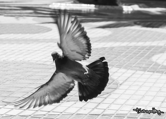 palomas en el parque / pigeons in the park