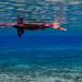 Flickr photo 'Monster Snorkeler in Alexander' by: Phil's 1stPix.