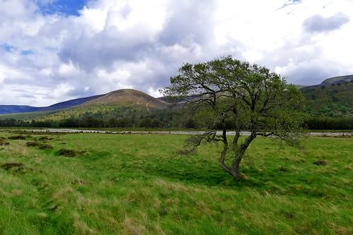 Glen Feshie | by Nick Bramhall