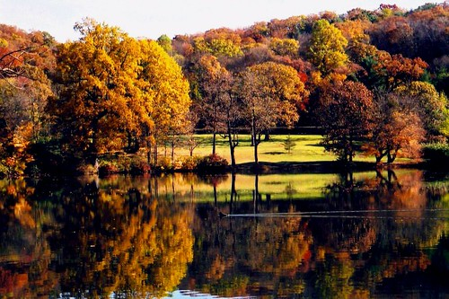 autumn red lake newyork color reflection green fall film nature beauty yellow fun gold aquarium mirror duck published unitedstates ngc competition longisland winner aarp fishhatchery 2015 coldspringharbor 3rdplace supershot nonprofitorganization wng onlinesite faunafloragroup naturescarousel thesunshinegroup sunrays5 nystatetrouthatcheryfor99years takenonoctober24th2000 whitelinewake novermber2014 themeautumncolors
