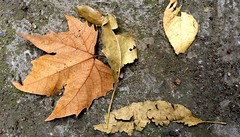 Found Art (Leaves)