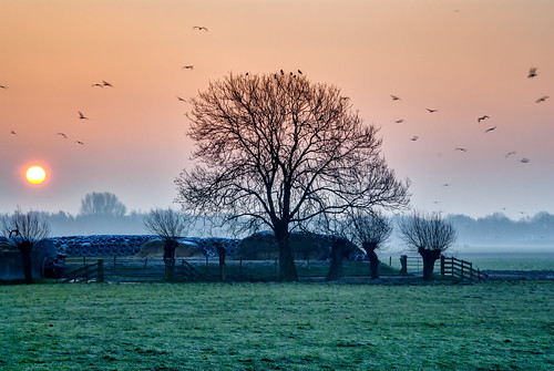 trees light sky birds misty fog sunrise fence landscape nikon frost day nederland meadow nl noordholland wognum