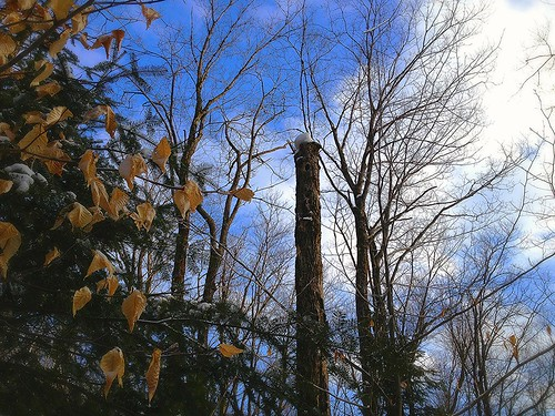 trees winter light snow nature clouds forest landscape outdoor snowshoes uploaded:by=flickrmobile flickriosapp:filter=nofilter