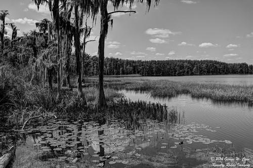 nature landscape blackwhite nikon florida case clermont lakecounty nikkor18200mm lakelouisastatepark d7100 kountryroadsimaging lakehammond nikond7100 georgecase