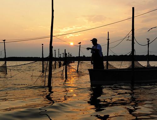 Fishing Gear Types Pound Net