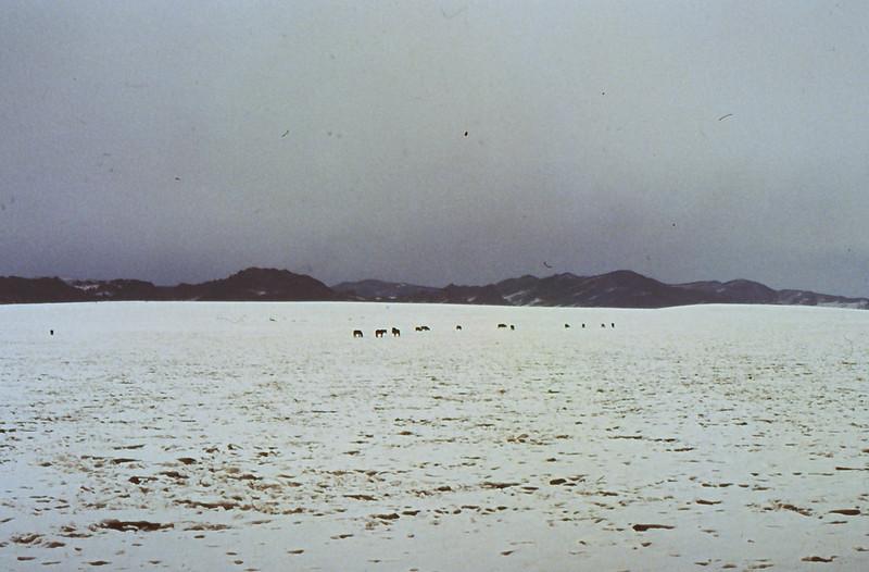MONGOLIA 1994 01-0003