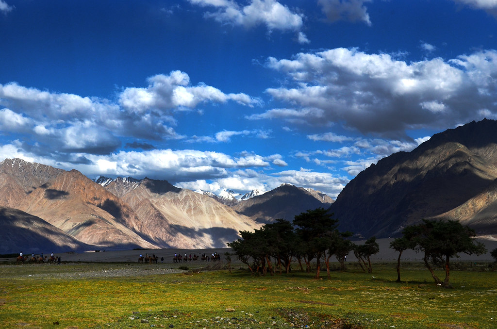 Oasis Within The Cold Desert Sand Dunes Nubra Valley L Flickr