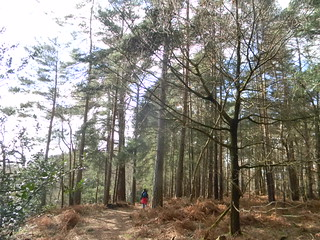 Heading for Thursley | by moontiger