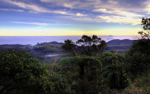 mist srilanka lowcloud nuwaraeliya hortonplains hortonplainsnationalpark