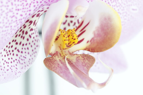 Orchidea | by Gianni Spadavecchia