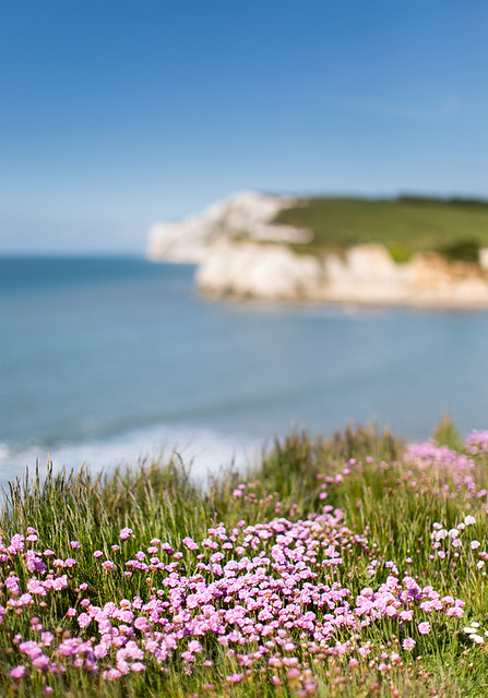 50mm of Freshwater Bay Pinks