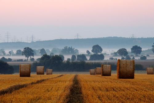 fog day morgennebel