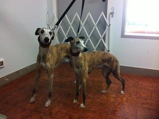 Aki & Nora | by wellnessdog