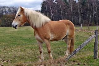 Pferd   by mama knipst!
