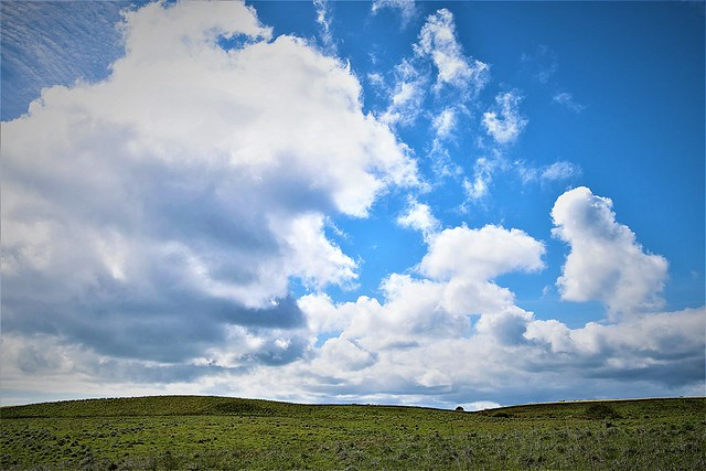 Blue and cloudy sky thinking at Bempton Cliffs