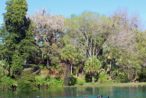 park landscape scenery springs river water trees palmtrees dunnellon florida