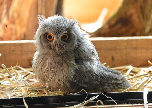 Owl 2 | by Dirk Paessler