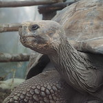 Di, 14.07.15 - 16:42 - Zoologico de Cuenca