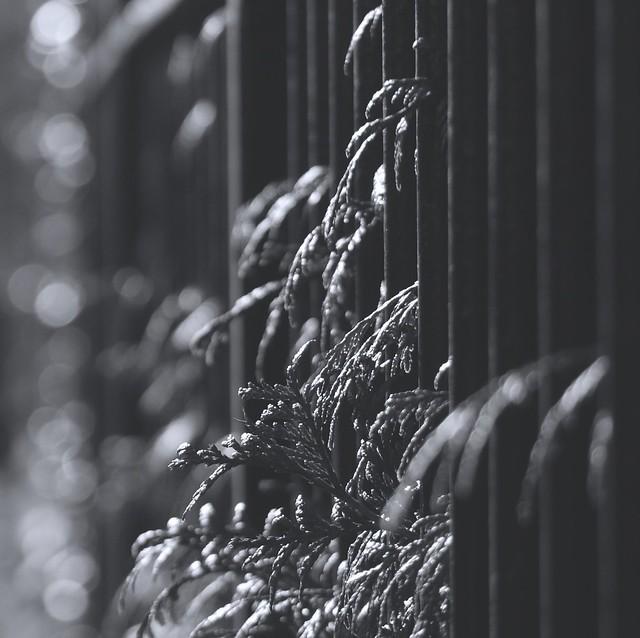 Fence and foliage