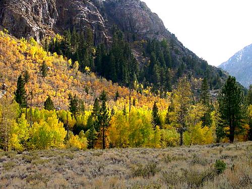 Rush Creek Autumn 2000