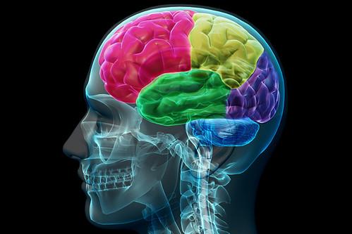 brain 22 | by ajeofj3