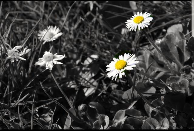 Natur pur......