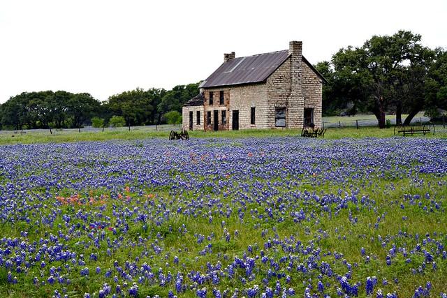 The Bluebonnet House.