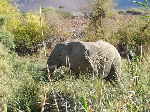 Palwag - olifant bij lodge 1