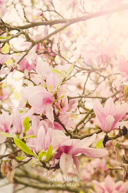 ¡Primavera!!!