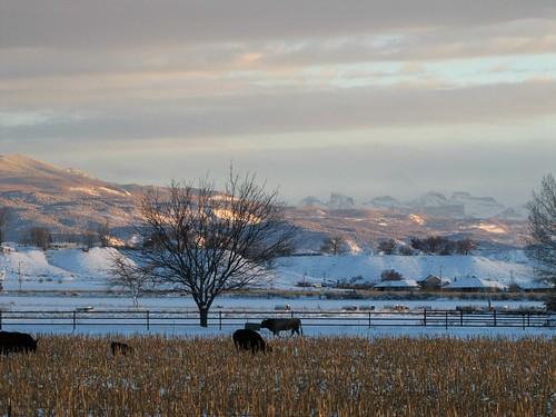 winter mountains clouds cornfield colorado cattle dusk grazing sanjuanmountains montrosecolorado