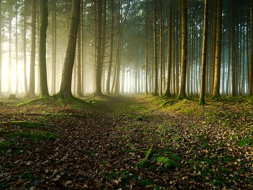Forest revisited