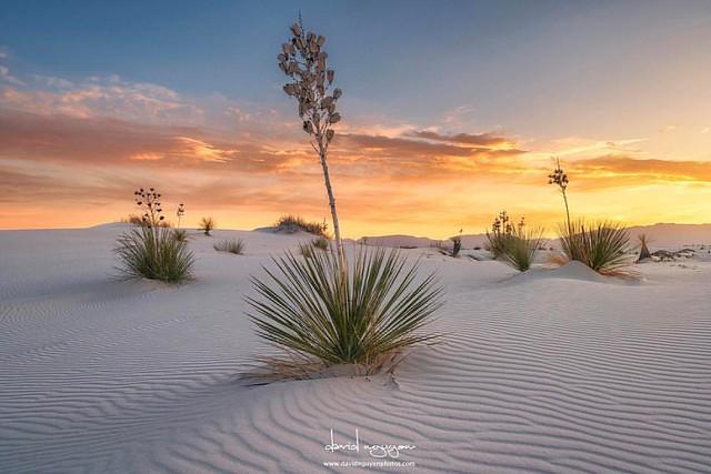 White Sand Monument National park. #whitesandsnationalmonument #sunset #davidnguyen #photography #fineart #sonya7rii #sonyimages #canonlens #sanddunes #ripples #yuccas #travel #roadtrip #nationalpark #beautiful #sky #newmexico #goldenhour