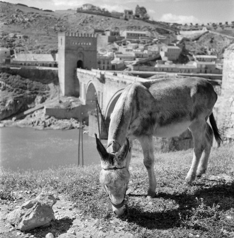 Un burro junto al Puente de san Martín de Toledo en los años 50. Fotografía de Nicolás Muller  © Archivo Regional de la Comunidad de Madrid, fondo fotográfico