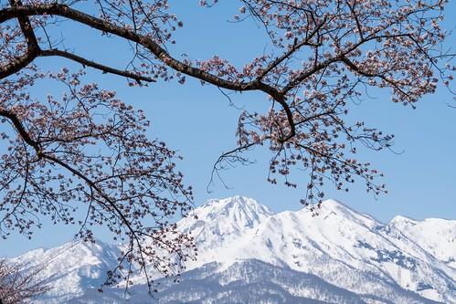 春へ引き継ぐ | by hiroching