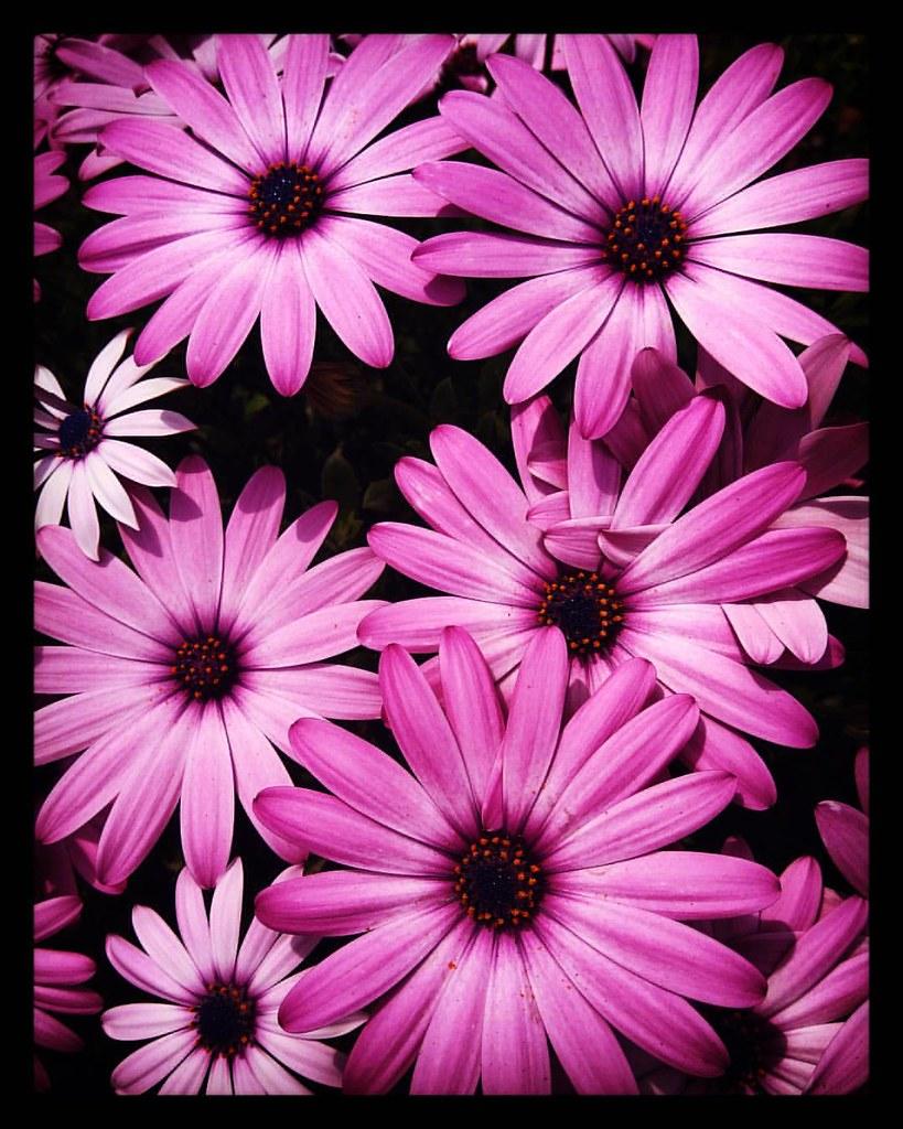 Fiori Belli.Voi Due I Miei Fiori Piu Belli Alicionia Flowers Flickr