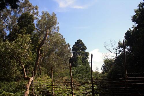 trees india tamilnadu dindigul ind