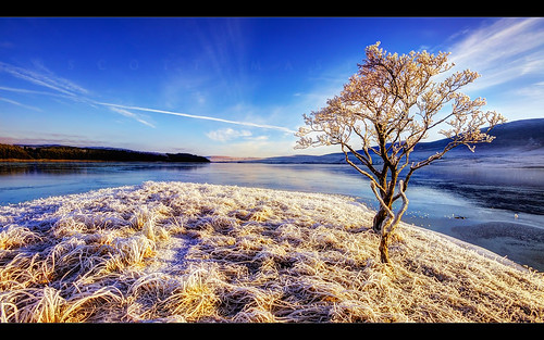 blue sky cold tree landscape scotland frozen highlands frost pentax unitedkingdom lone loch naver sigma1020mm altnaharra fascinatinglight scottmasterton