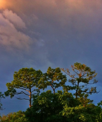 trees color nature clouds sunrise outdoors rainclouds